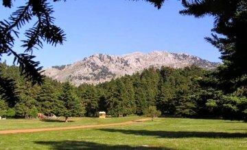 8ο Μουσικό Φεστιβάλ Δάσους στην Αρβανίτσα