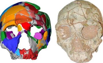 Απήδημα Μάνης: Κρανίο 210.000 ετών αποτελεί το αρχαιότερο δείγμα σύγχρονου ανθρώπου στην Ευρασία