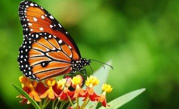 Χάνονται τα πουλιά και οι πεταλούδες – Τι συμβαίνει