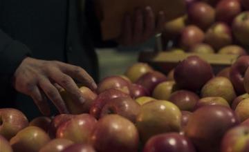 «Μήλα»: Η νέα συμπαραγωγή της Nova διεκδικεί μία θέση για το Όσκαρ Διεθνούς Ταινίας