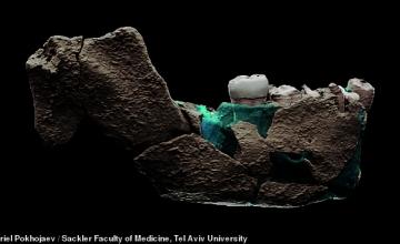 Ανακαλύφθηκε ένας άγνωστος έως τώρα Homo, ο Nesher Ramla
