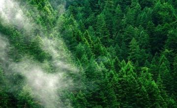 Νέα δάση θα γίνουν η ασπίδα της Ευρώπης ασπίδα για την κλιματική αλλαγή